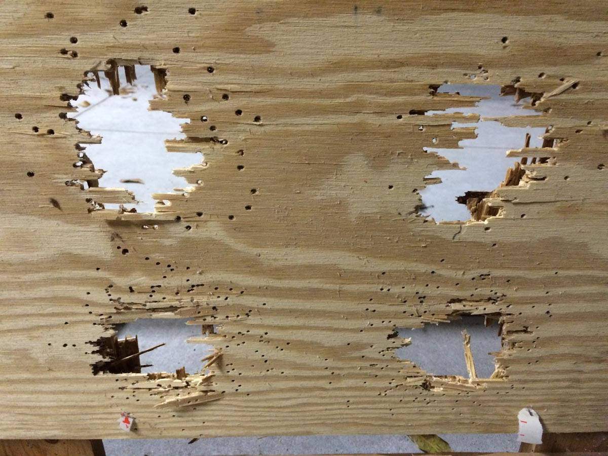"At a range of 10 feet, all shot sizes made dramatic holes in this 7/8"" thick plywood."