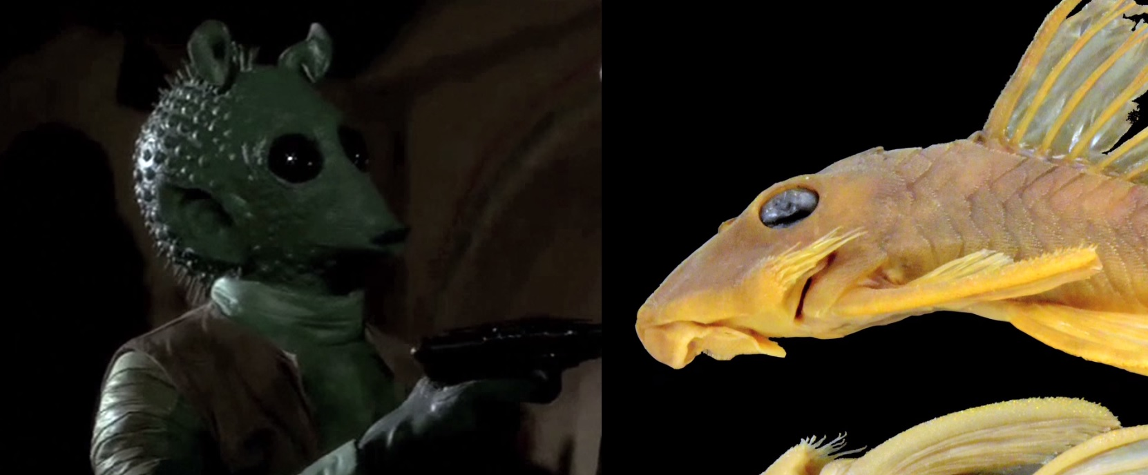 Greedo (left) and the catfish named after the character. Image screenshot of video by Auburn University College of Sciences and Mathematics on YouTube.
