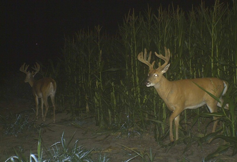 By the end of summer into early September, find the food and you find the deer.