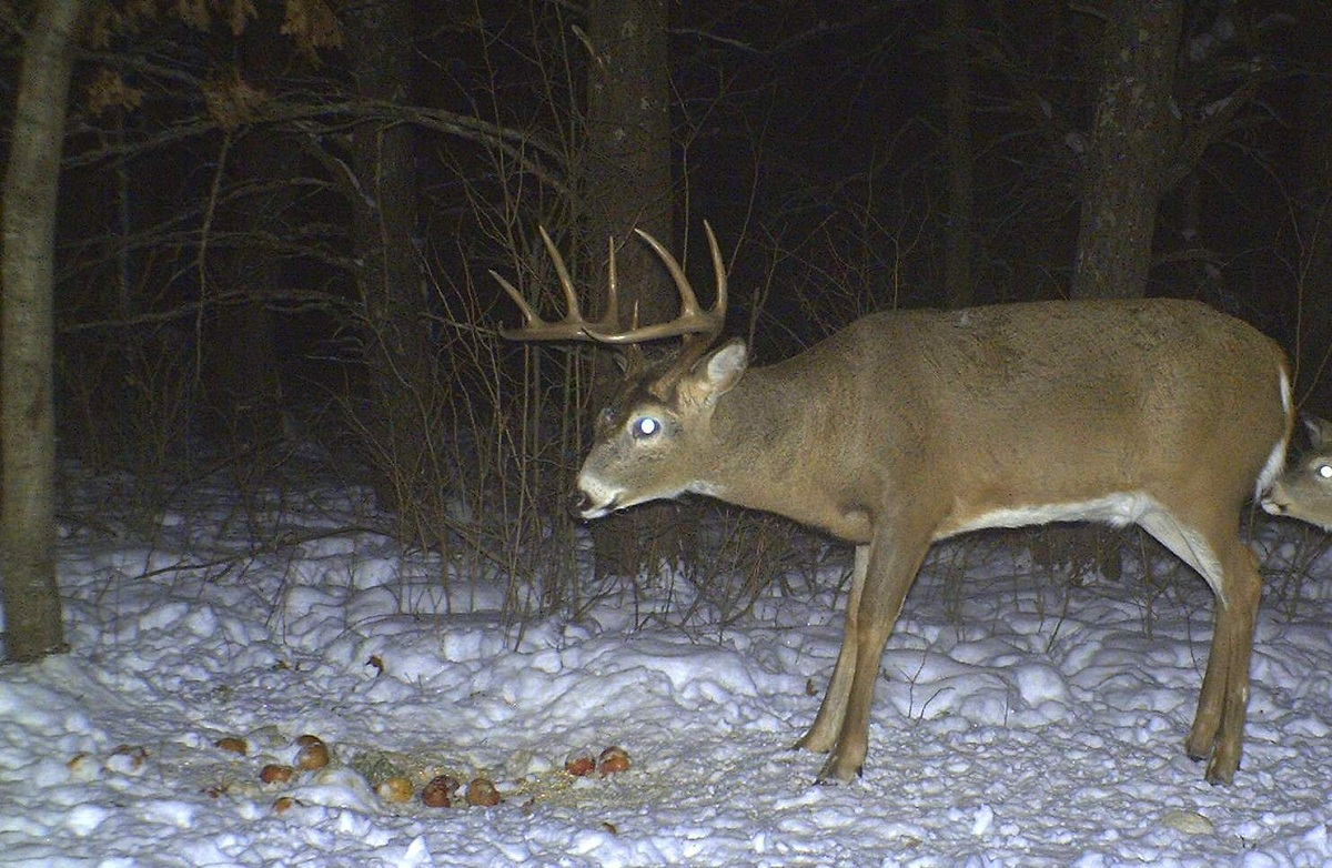 the where when and why of year round trail camera placement