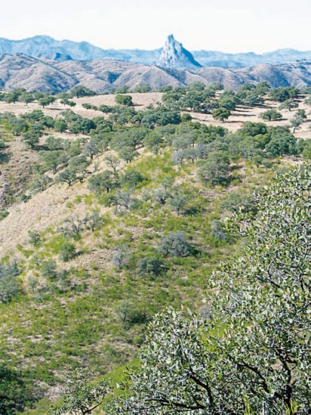 The Chairababi Ranch features some prime Coues' country. Image courtesy Dennis Dunn.