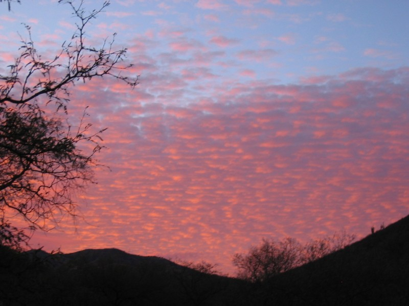Every Sonoran sunset is different; all are beautiful. Image courtesy Dennis Dunn.