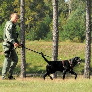 Some states have begun to train canines to crack down on fish poaching. Here, a dog and his handler with the Florida FWC's Special Operations Group are training in the field.