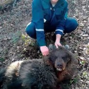 55-year-old Natalya Pasternak (right) is in serious condition after being attacked and buried by a Russian bear.