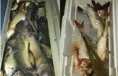 Is this enough fish to be kicked out of a lake? One man said he was told to leave after netting 31 fish in a pay lake.