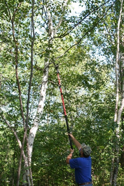 A pole saw is an important tool in cutting shooting lanes. It allows you to cut up high where the branches are often a problem, well above the likely sight and smell range of the deer.