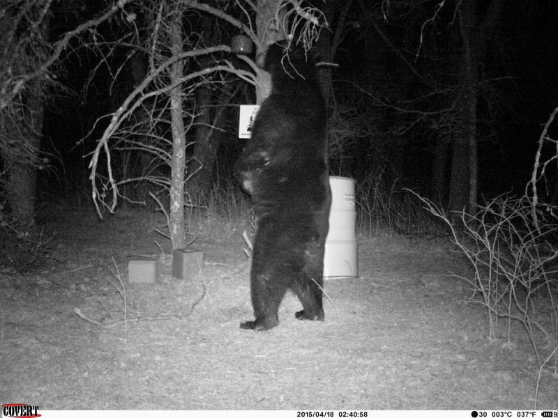 I have big bears where I live, and that intrigues a lot of people. By trading bear hunts for hunting and fishing trips I have had some great experiences and met some great people.