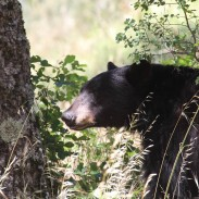 A backcountry encounter with a bear led to some fisticuffs before the campers were able to drive it off.