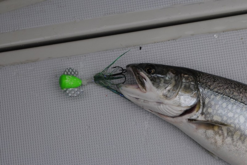 Spin-N-Glos, which have buoyant bodies, are a good bet for bumping bottom for lake trout.