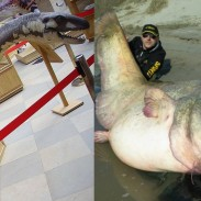 One monster hunter says that Nessie is nothing more than a wels catfish, like the one caught earlier this year by Italian angler Dino Ferrari (right).
