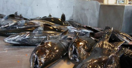 Rock Creek Hatchery provides thousands of Chinook to the Umpqua and North Umpqua rivers, but a recent fish kill might put a hamper on future seasons.