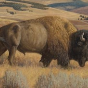 bison feat