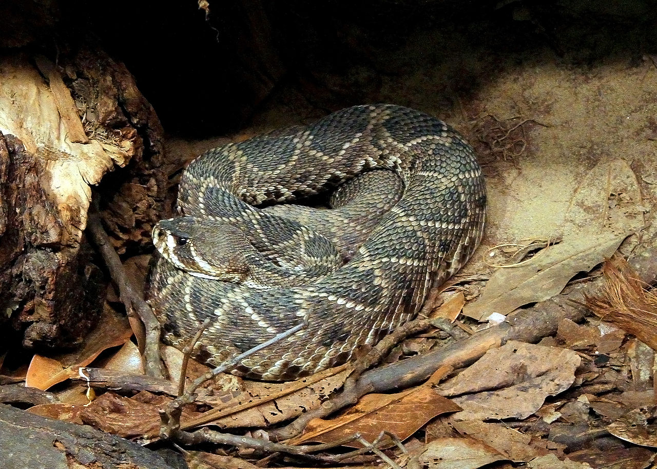 Bond Arms | The Top 10 Deadliest Snakes in North America