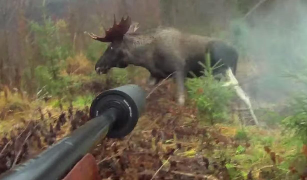 Video: Huge Moose Shot at Close Range   OutdoorHub