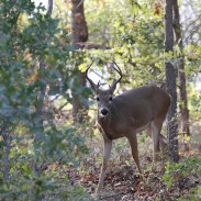 Virginia hunters are reminded to keep deer urine at home. It's now the law.