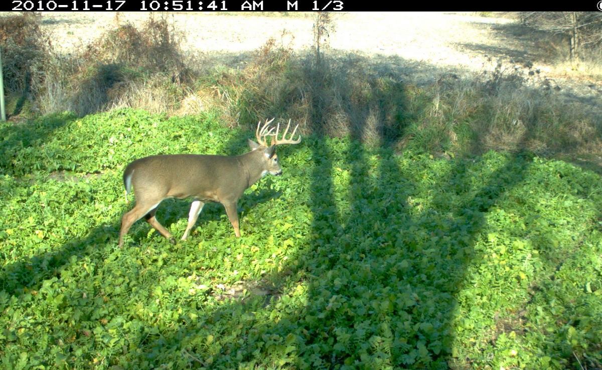 Best Fall Food Plot Seed For Deer