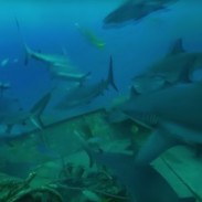 shark360