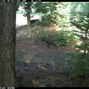 "While one of the clearest images that California officials have, the ""wolf"" is still hard to make out."