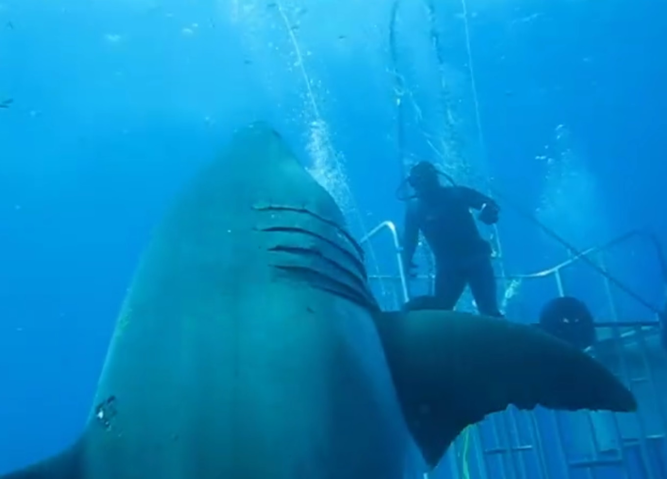 Is This The Biggest Great White Shark Ever Filmed