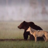 This odd couple not only poses for pictures together, but hunts as well.