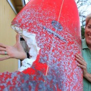 Elinor Dempsey shows off the massive bite mark in her surfboard.