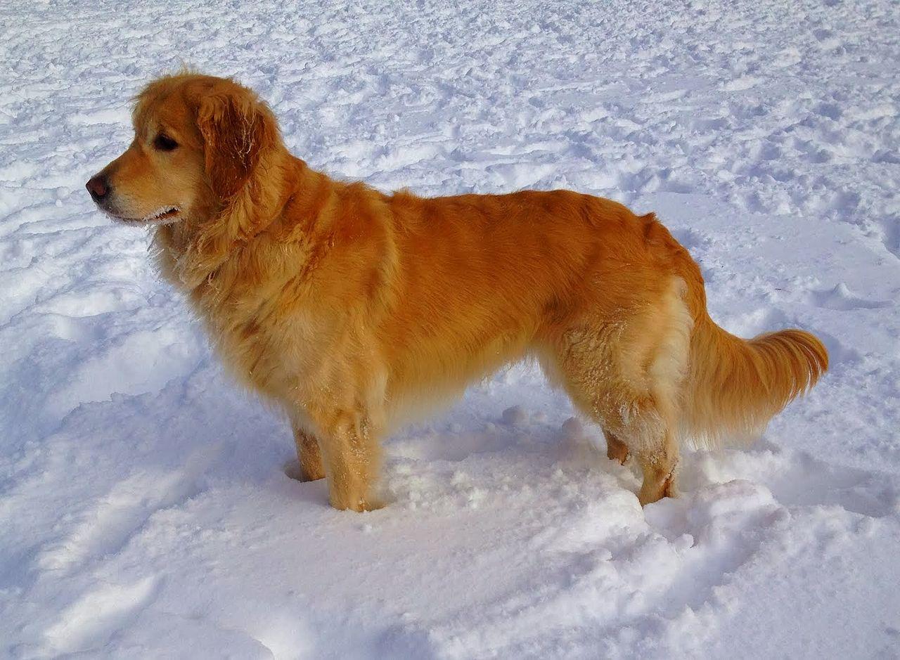 the top 10 smartest hunting dog breeds outdoorhub. Black Bedroom Furniture Sets. Home Design Ideas