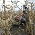 A hunter calls from the flooded corn at a managed waterfowl area.
