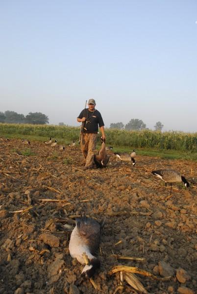 Joe Robison retrieves fallen geese from a picked sweet corn field.