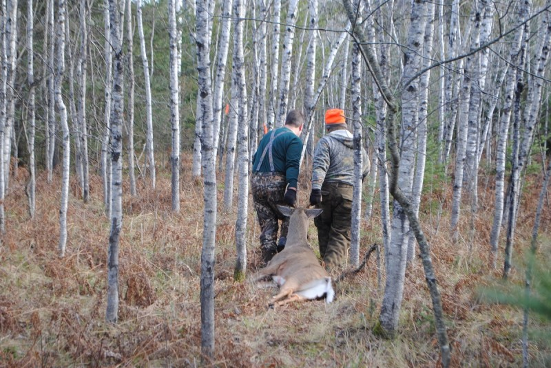 Hunters drag a deer back to camp on opening day of the firearms season.