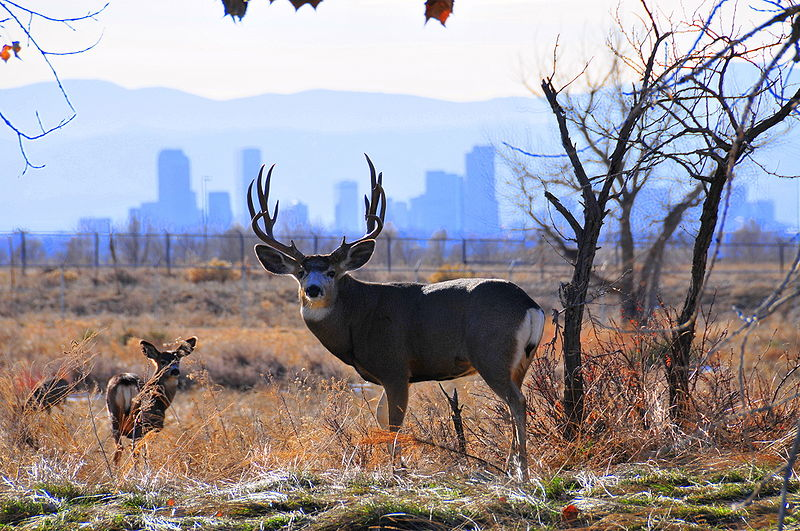 How to Determine How Much Antlers Are Worth | OutdoorHub