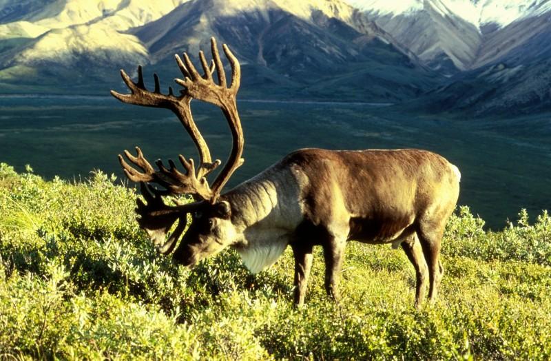 Image courtesy Dean Biggins/ US Fish and Wildlife Service.