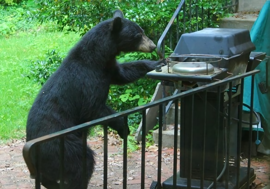20 Examples of Bears Doing Human Things | OutdoorHub