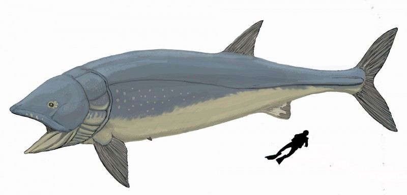 Leedsichthys with diver for scale. Image from Dmitry Bogdanov on the Wikimedia Commons.