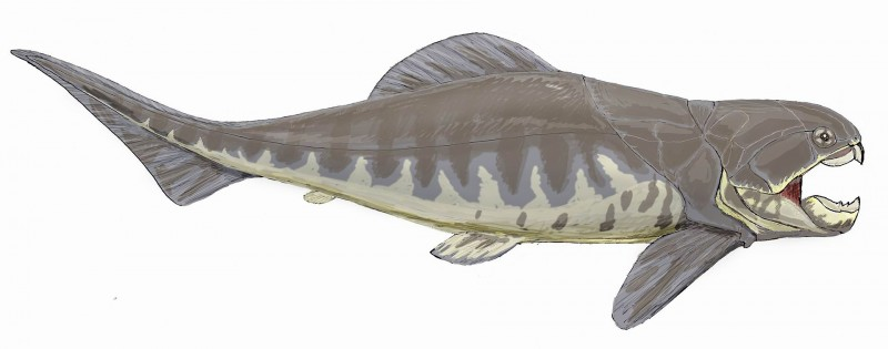 An artist's depiction of the fish. Image from Dmitry Bogdanov on Wikimedia.