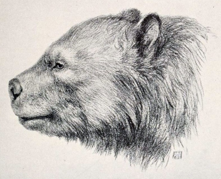 A recreation of the ancient Arctotherium.