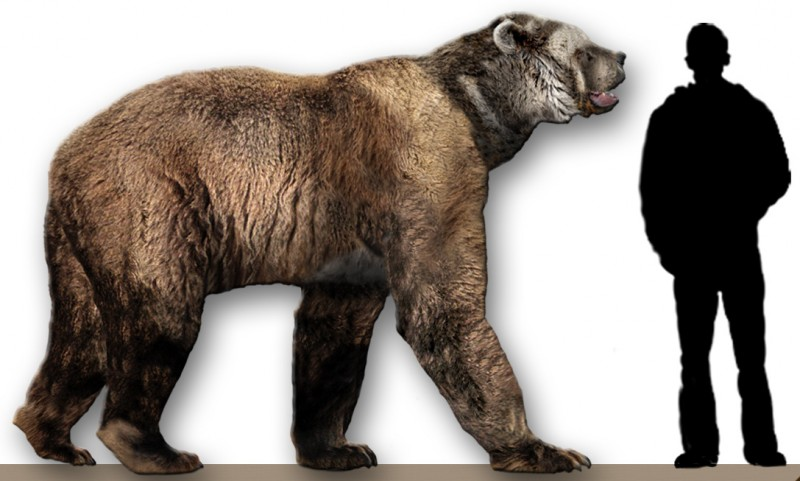 This is just an average-sized short-faced bear. Image from Dantheman9758 on the Wikimedia Commons.