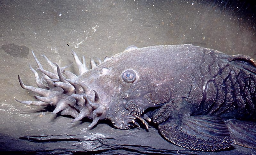 The Electric Catfish and 6 More Bizarre Catfish Species ...