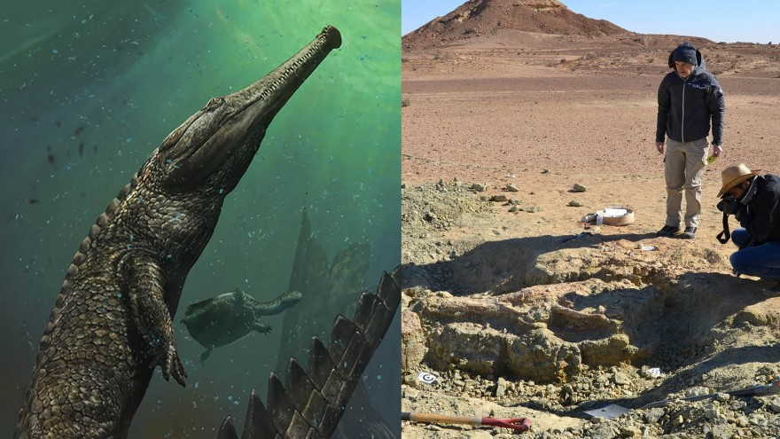 Massive Marine Crocodile Unearthed in Tunisia