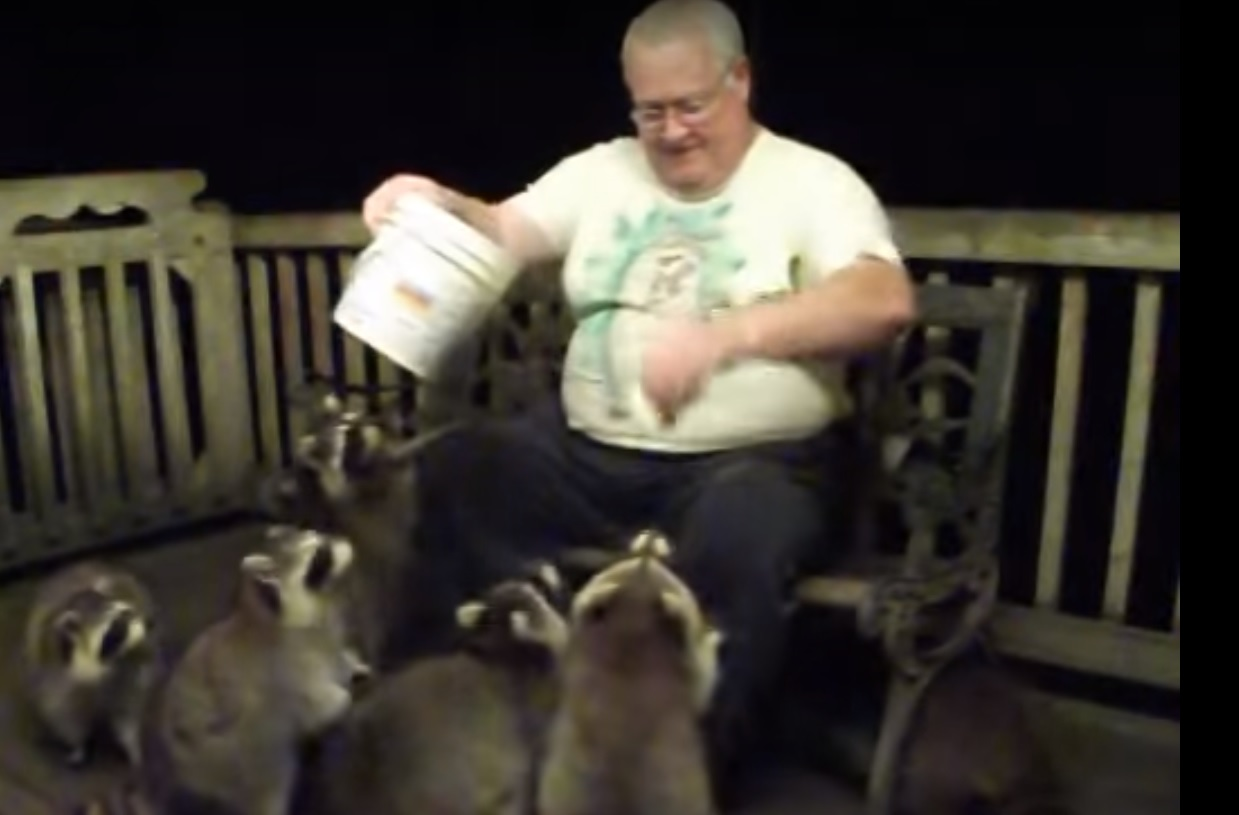The guy decided to feed the raccoons. When they started to eat, he instantly ran behind the camera. Press Share, make your friends interesting