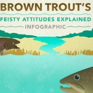 Browntrout_Feature