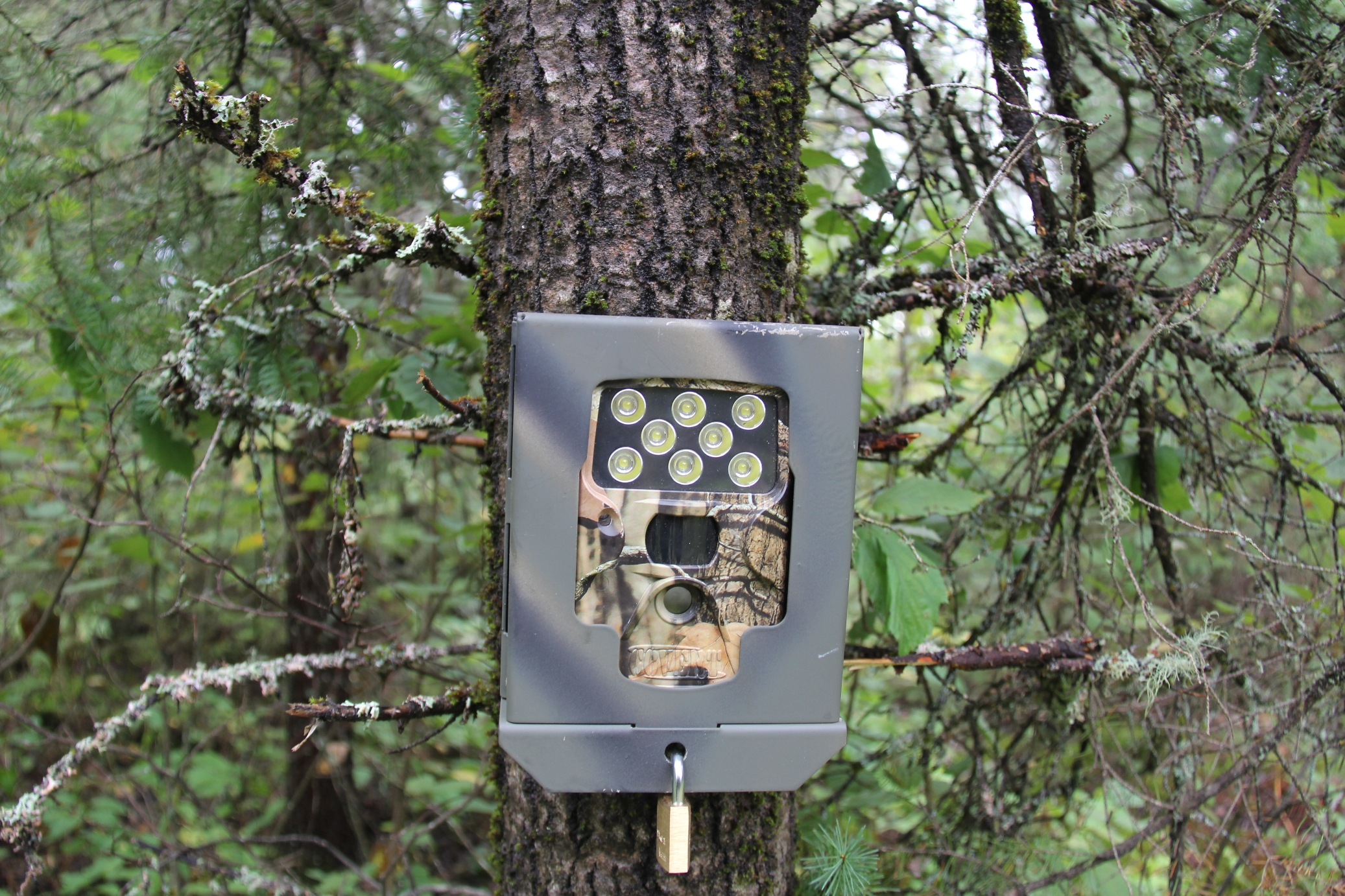 3 Ways to Theft-Proof Your Scouting Cameras | OutdoorHub