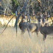 It's official: captive deer hunting is now legal in the Hoosier State.