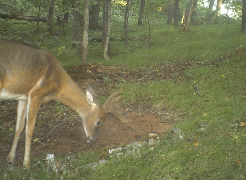 A mineral site on your property allows you to monitor the deer with a trail camera and watch their antler growth as well as the overall health of your deer herd.