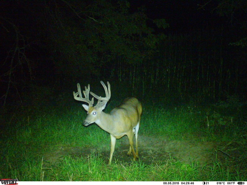 Bucks will find the minerals and use them often. Good minerals help strengthen their skeletal system during the time the antler growth is robbing their bones of valuable nutrients.