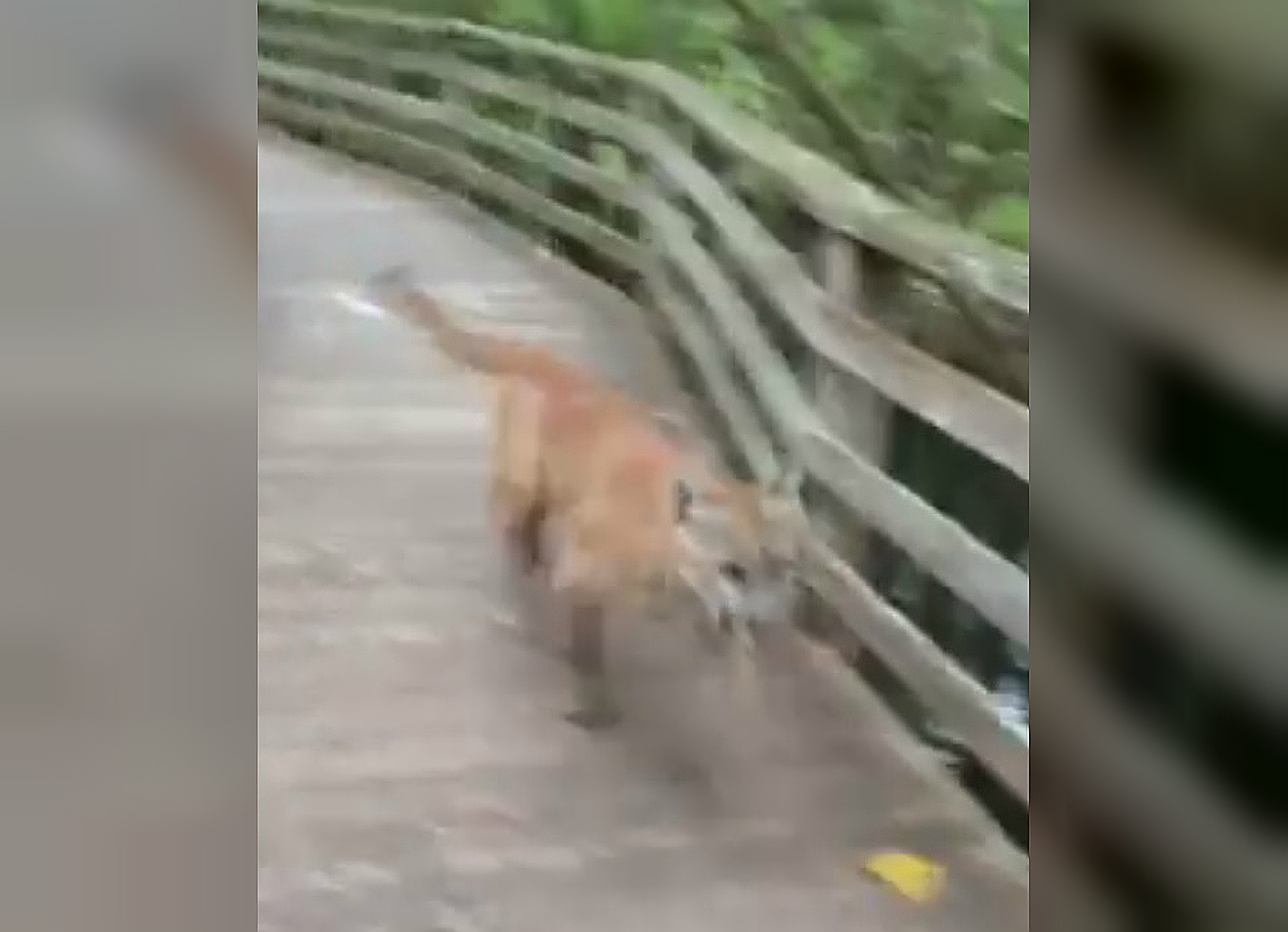 bridge city cougar women Video: florida woman runs into mountain lion on share tweet text if you live in cougar territory and you florida woman runs into mountain lion on bridge.