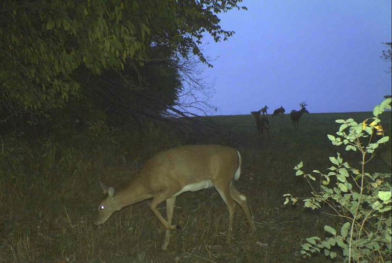 During the rut, you must find the does to find the bucks. The bucks know where the does live and the GPS tracking research shows that they visit these areas often.