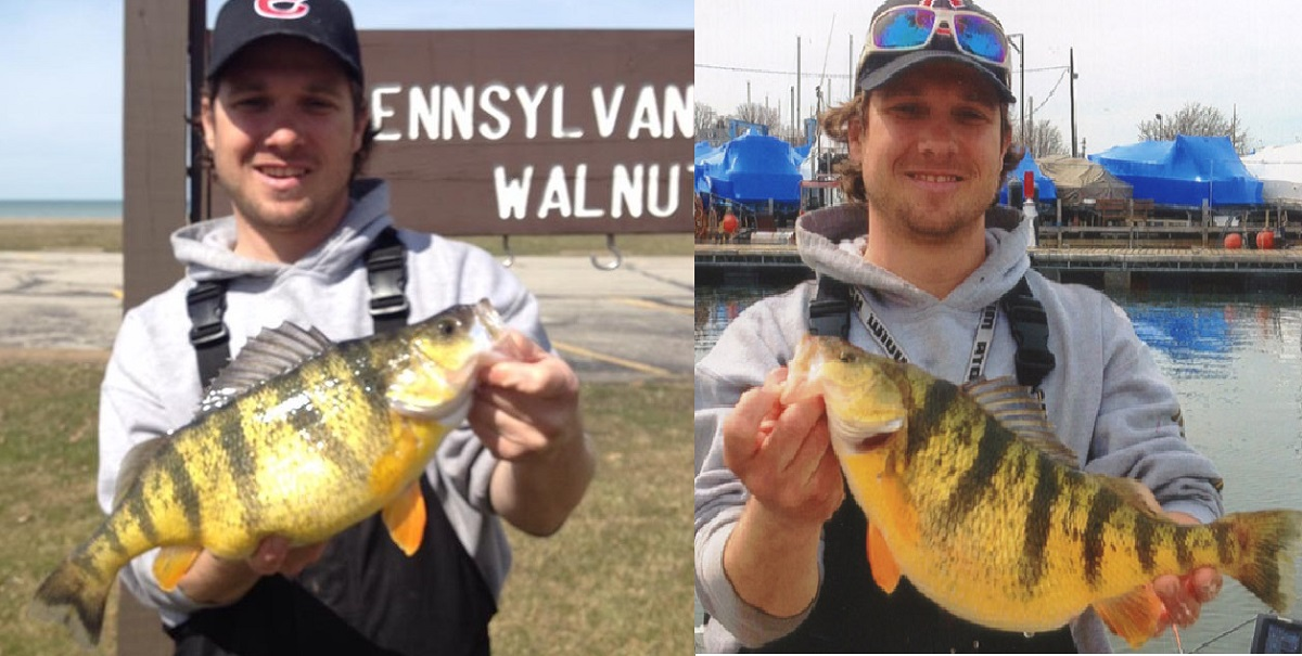 Lake erie perch sets new pennsylvania record outdoorhub for Lake erie fish