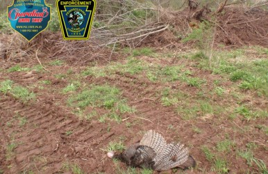 turkeypoacher56