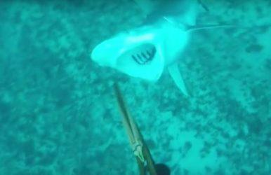 Aus Shark 1 6-28-16