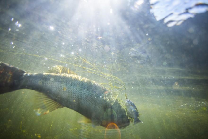 Underwater Bass 6-9-16